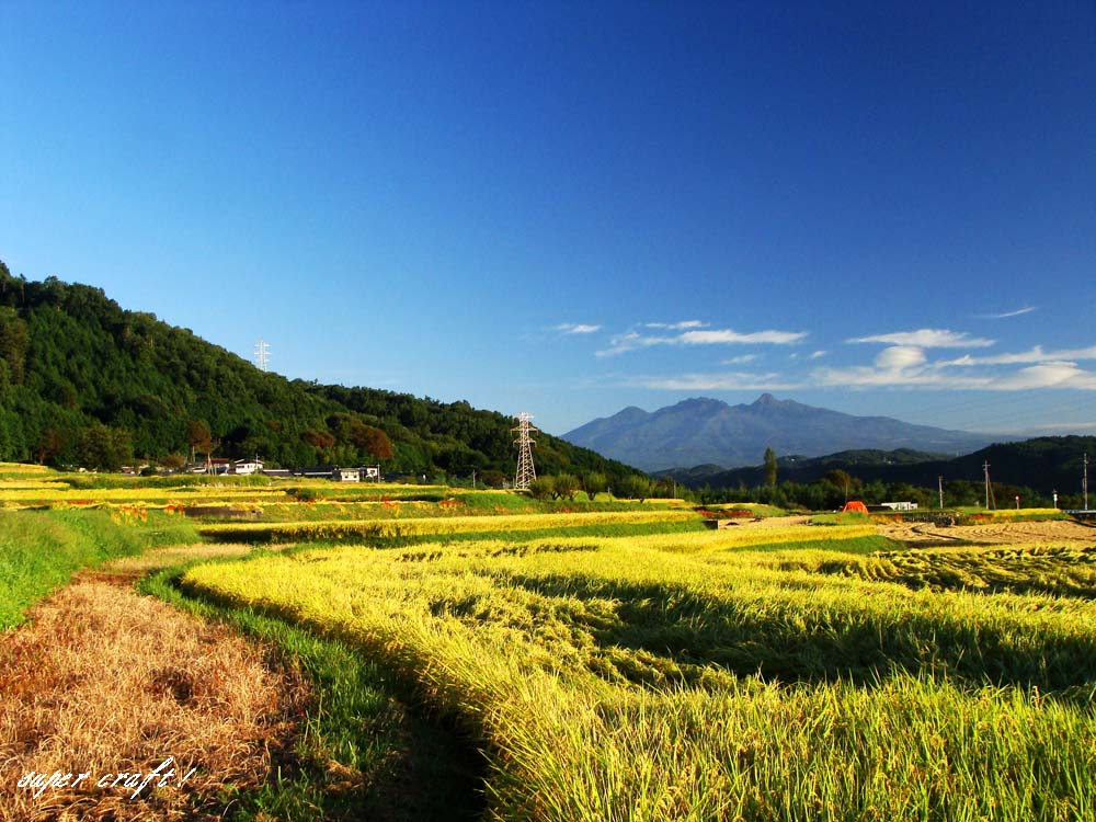 画像2: わに塚の桜米 新米 令和 元年産    玄米30kg