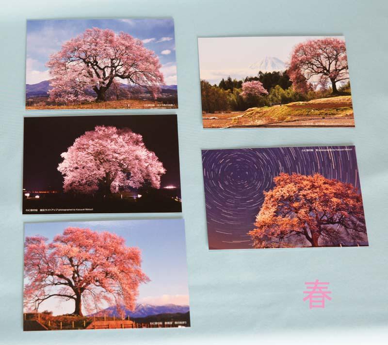画像2: 【わに塚の桜 四季】 絵葉書セット 12枚組み フルカラー