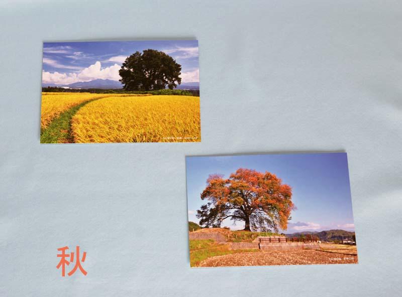 画像4: 【わに塚の桜 四季】 絵葉書セット 12枚組み フルカラー