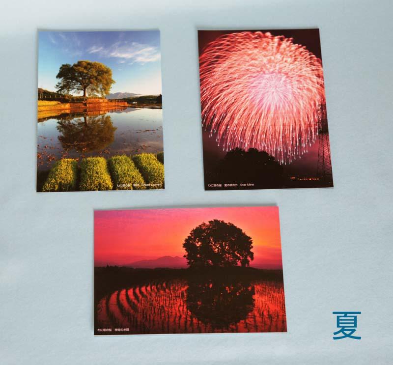 画像3: 【わに塚の桜 四季】 絵葉書セット 12枚組み フルカラー