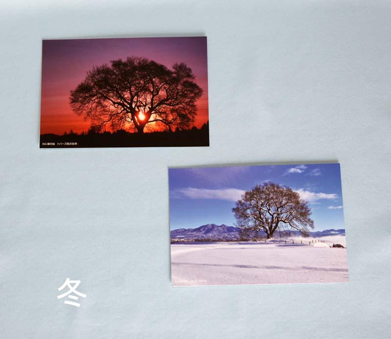 画像5: 【わに塚の桜 四季】 絵葉書セット 12枚組み フルカラー