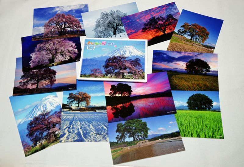画像1: 【わに塚の桜 四季】vol 4 絵葉書セット 12枚組み フルカラー